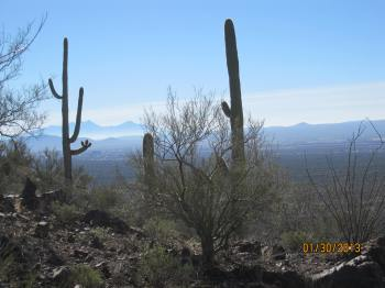 Saguaro cactus - the only place they grow in the world is in the Tucson area.