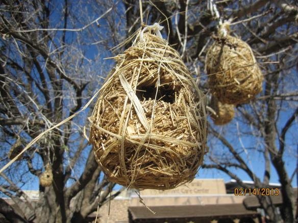 Nests built by birds called weavers.