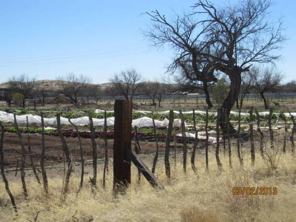 interesting fence surrounding a garden on Arivaca Road