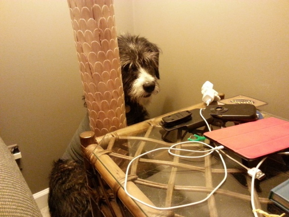 Jezzy finds a safe spot behind the lamp and end table.